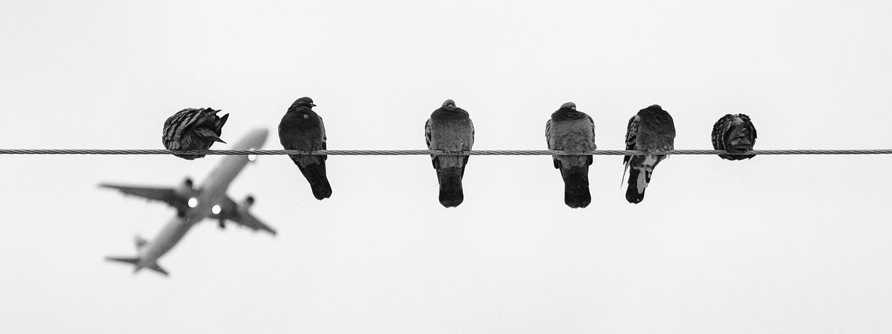 EuGH: Vogelschlag bleibt außergewöhnlicher Umstand